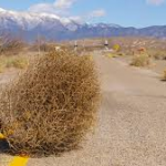 Waiting for recruitment responses is like watching tumbleweed